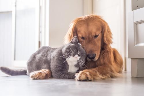 Wnętrza przyjazne zwierzętom