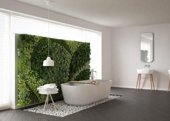 Rośliny w łazience – jakie wybrać?